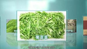 中国菊苣之都
